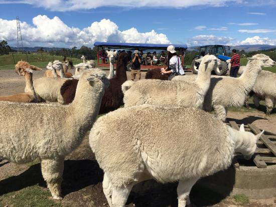 Ngongotaha, Nowa Zelandia: farm tour