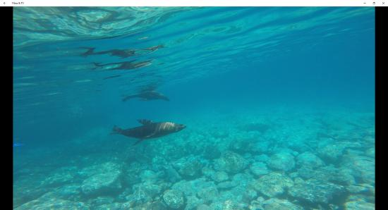 Narooma, Australia: Seals playing near me - Montague Island