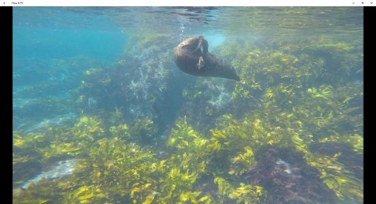 Narooma, Avustralya: Seal scratching himself - Montague Island