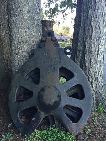 Sooke, Canada: 百年及千年的樹年輪,保存得很好。有些超過百年的樹,至今仍持續生長,並開花結果。