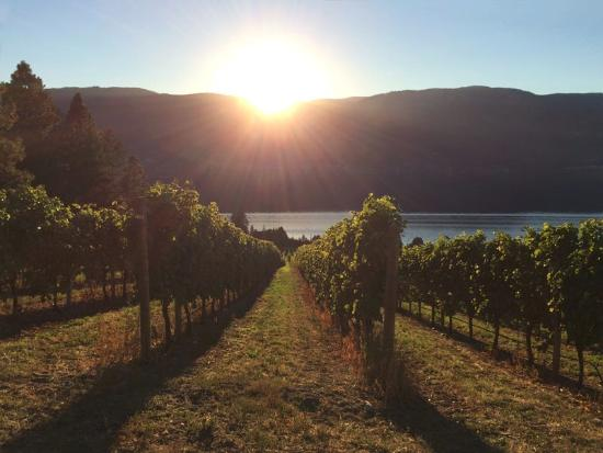 Winfield, Canada: Gray Monk Winery in the fall
