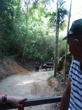 Chalong, Tajlandia: The buffalo ride