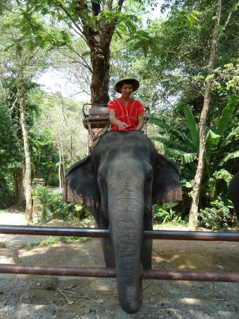 Chalong, Tayland: I wanted to keep the elephant