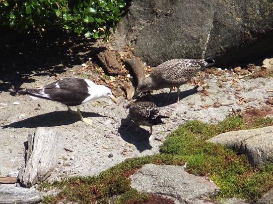 Westport, Yeni Zelanda: Feeding time for the birds