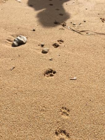 I Gatti di Su Pallosu: photo7.jpg