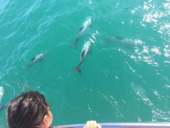 Akaroa, Nueva Zelanda: photo1.jpg