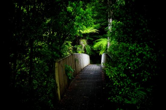 Thames, Yeni Zelanda: on route to waterfall
