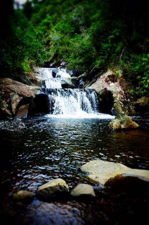 Thames, Yeni Zelanda: waterfall - well worth the walk up