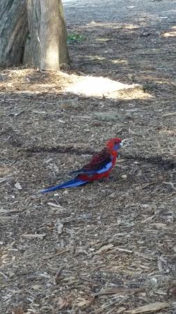 Anglesea, Australia: FB_IMG_1454803649714_large.jpg