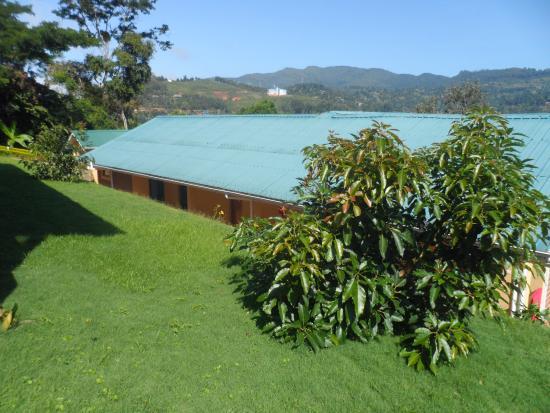Avocado Lodge: New Avocado tree starting to bear fruits