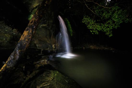 Buderim, Australia: Taken at night using a torch to light up different areas.