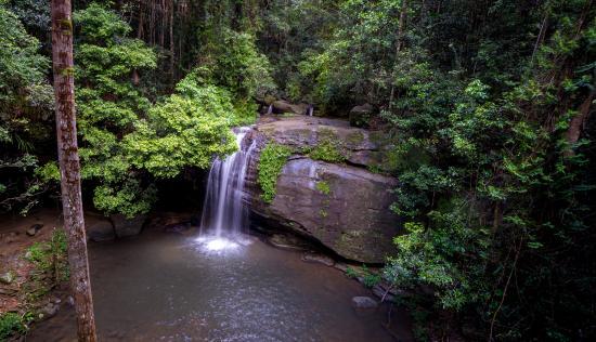 Buderim, Australia: Taken from the foot bridge.