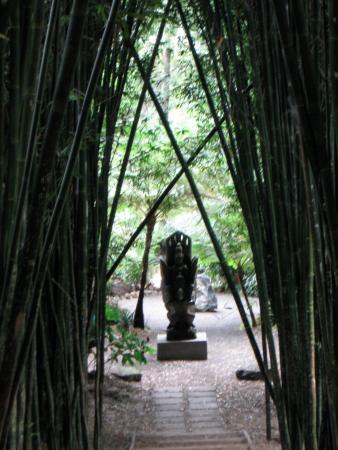 Mullumbimby, Australië: bamboo forest