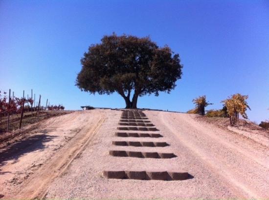 Paso Robles, كاليفورنيا: Akár a földi paradicsomban...