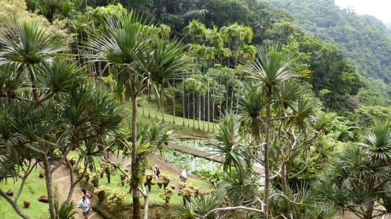 Jardin de Balata : vue des cimes