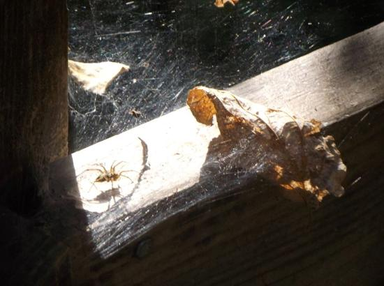 Bellevue, NE: Critters