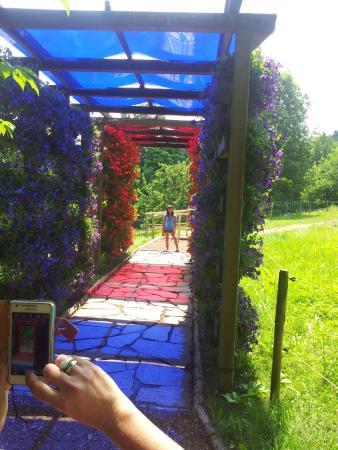 Gutach im Schwarzwald, Almanya: אחד המעברים הצבעוניים שבמקום