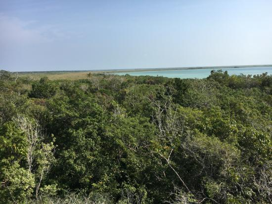 Quintana Roo, Meksika: View form the tower - above the canopy