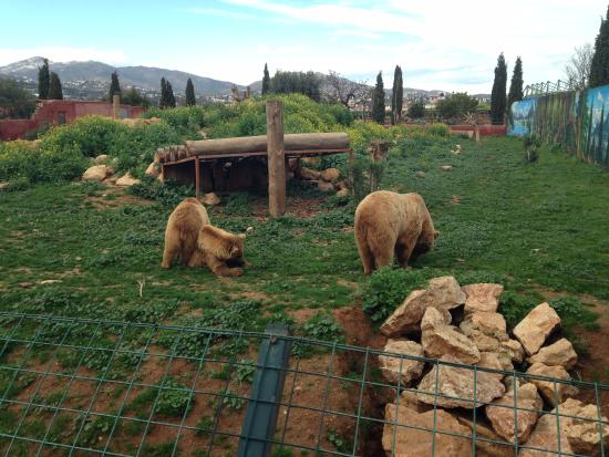 Spata, Grecja: Attica Zoological Park