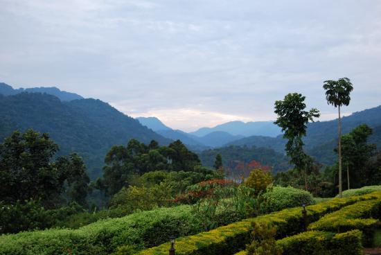Bwindi Impenetrable National Park, Uganda: Magisk udsigt over Bwindi National Park