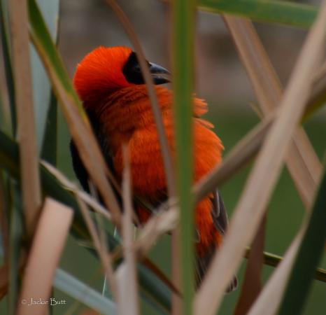 Hartbeespoort, Zuid-Afrika: Birdies to bring nature closer