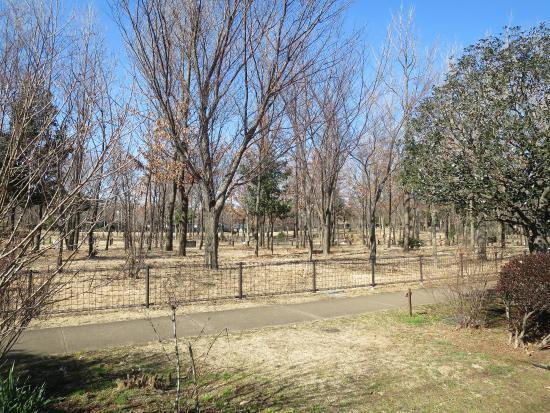 Kashinomiya Park