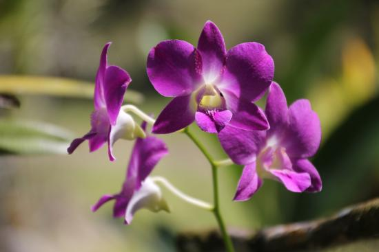Provincia de San Jose, Costa Rica: Orchids from the jungle
