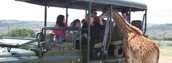 Jeffreys Bay, Zuid-Afrika: Safari