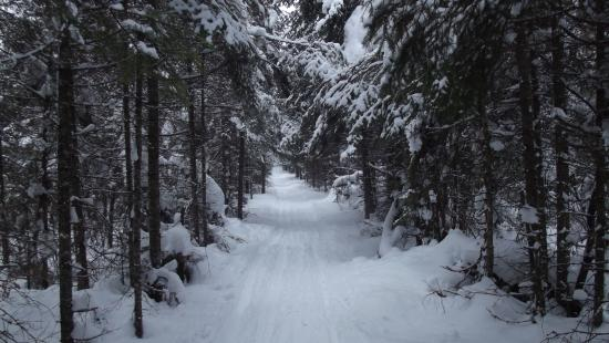 Poplar Creek Guesthouse B&B and Lake Cabin: Banadad ski trails