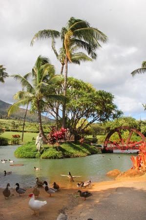 Wailuku, HI: around the grounds