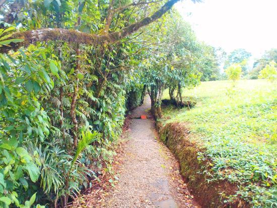 Bijagua de Upala, Costa Rica: Sendero de 5 km del hotel, hermoso.