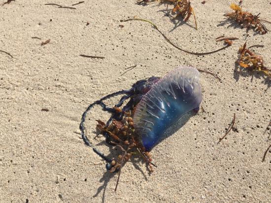 Fort Lauderdale Beach: Agua Viva