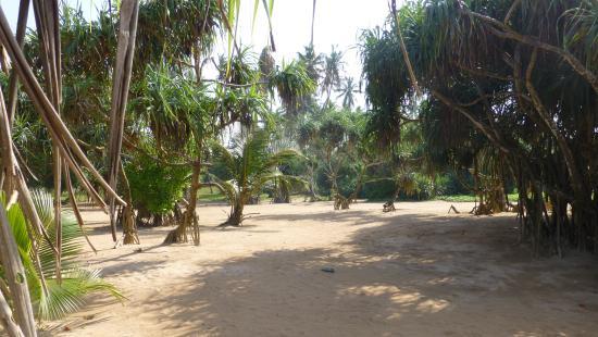 Μπεντότα, Σρι Λάνκα: Strand landeinwärts