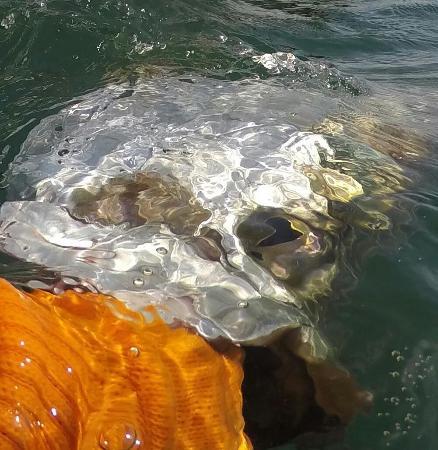 Fernandina Beach, FL: Amelia Island tarpon