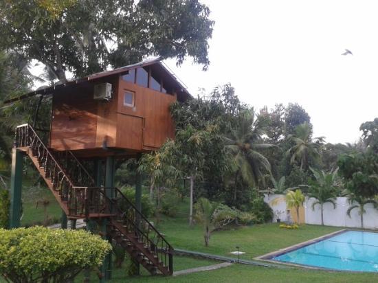 Gonagala, Sri Lanka: das Mango-Tree-House :-)