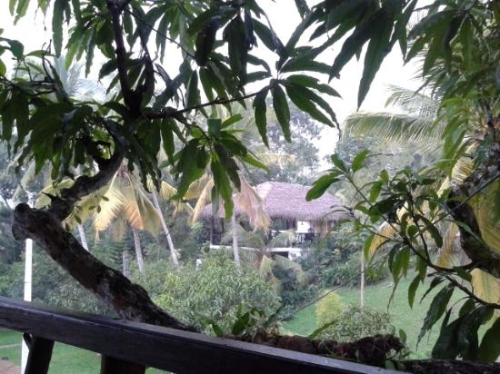Gonagala, Sri Lanka: Blick vom Balkon des Mango-Tree-House zur Restaurant-Terrasse