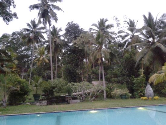Gonagala, Sri Lanka: der Ausblick am Pool