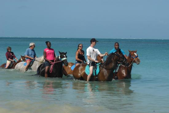 Buccoo, Tobago: Horsesenjoying a sea bath - horse and riders always closely and safely supervised.