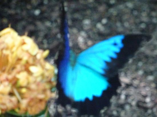 Cairns Region, Australien: Electric Blue