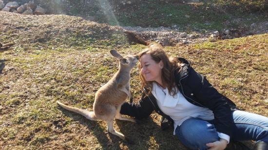 Horse Cave, KY: Kangaroo kisses