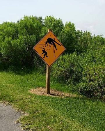 เซิร์ฟไซด์บีช, เท็กซัส: Quintana Beach (someone has a sense of humor)