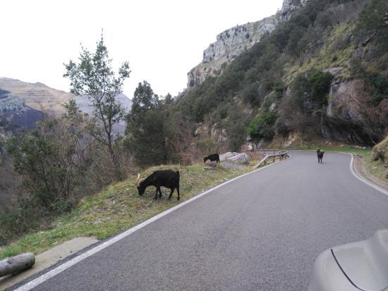 Regules, España: Rebecos del Valle de Asón