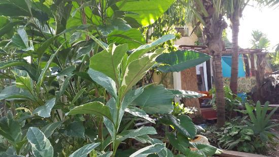 Aerolito Tulum: 20160126_100910_large.jpg