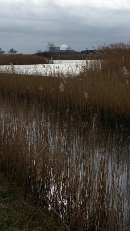 Westleton, UK: Minsmere reed beds with Sizewell in the background