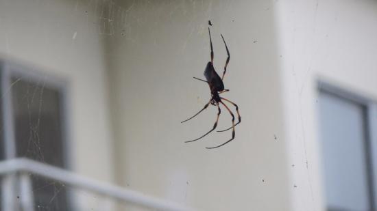 Victoria, Seychelles: The reason why I saw no flies!