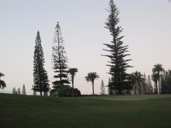 Kalaheo, Hawái: Assorted trees