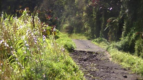 Arue, Polynésie française : route