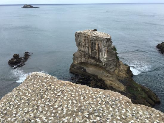 Muriwai Beach, Nova Zelândia: Birds up on the headland park