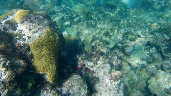 Oyster Pond, St. Maarten-St. Martin: Coral reef
