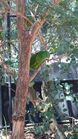 Healesville, Australië: DSC_6310_large.jpg